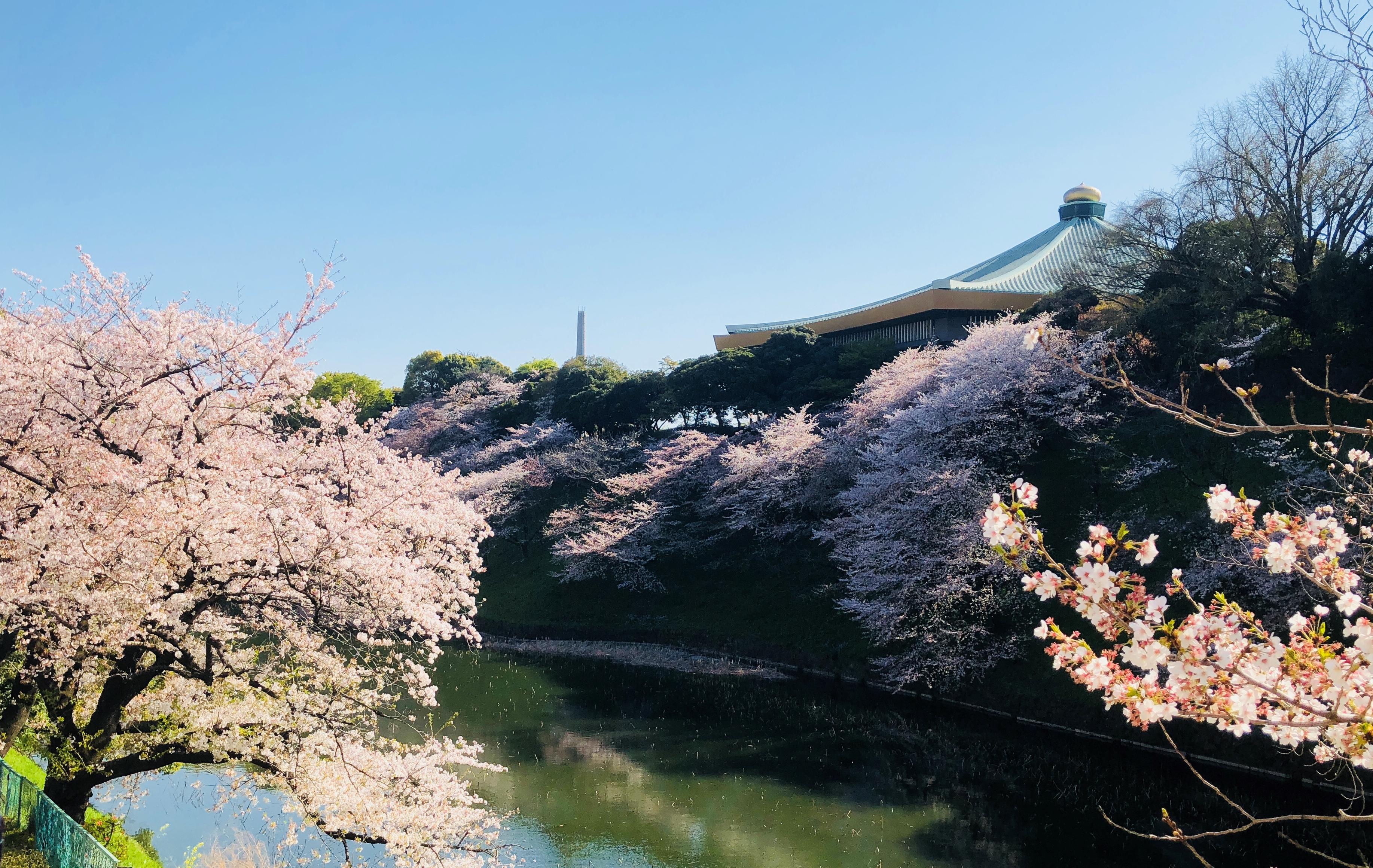 千代田さくら祭